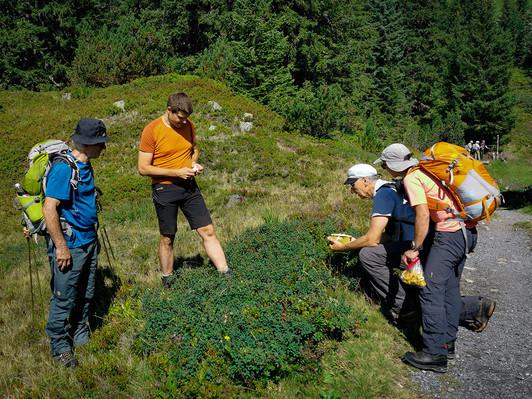 1.Aufstieg zum Wiegensee mit Pilzsuche.