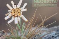 Neobiota