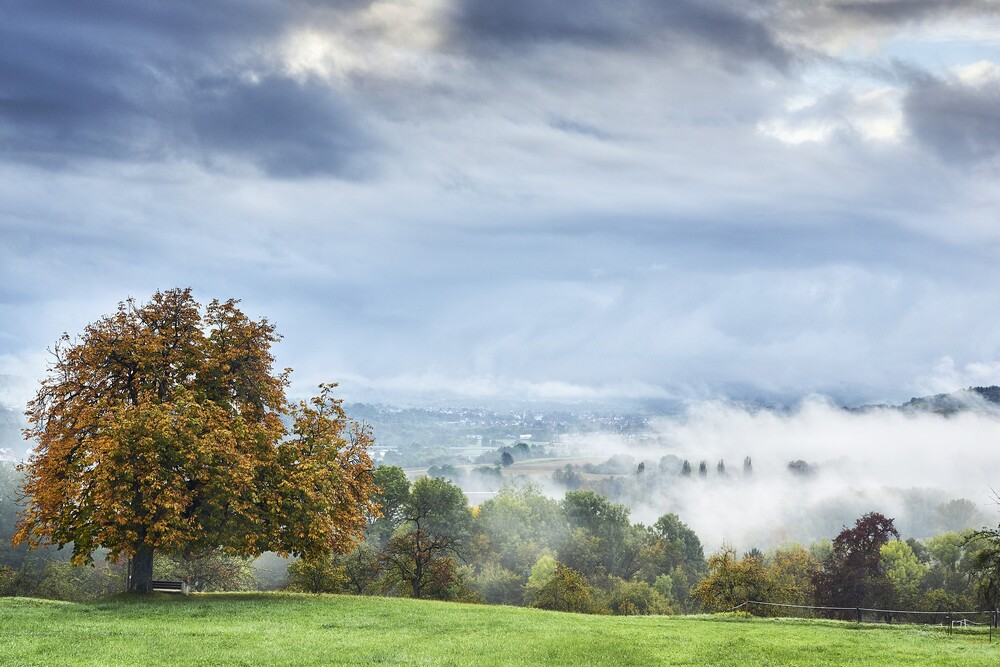 fog-g03fa276db 1920
