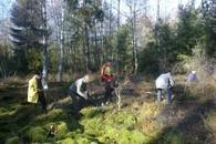 Natur und Umwelt: Erfolgreiche Landschaftspflege-Aktion 2014 im Schönbuch