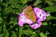Natur und Umwelt: Natura - Trail Nagold